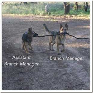 BranchManager